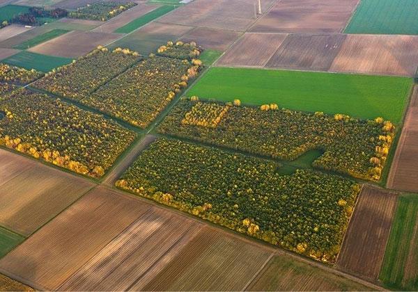 کشاورزی-دقیق-پردازش-تصاویر-چندطیفی
